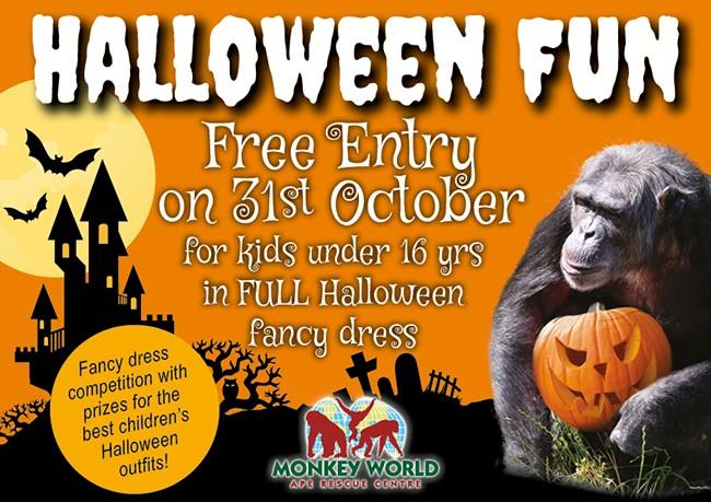 Halloween at Monkey World