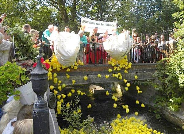 Wimborne in Bloom Duck Race