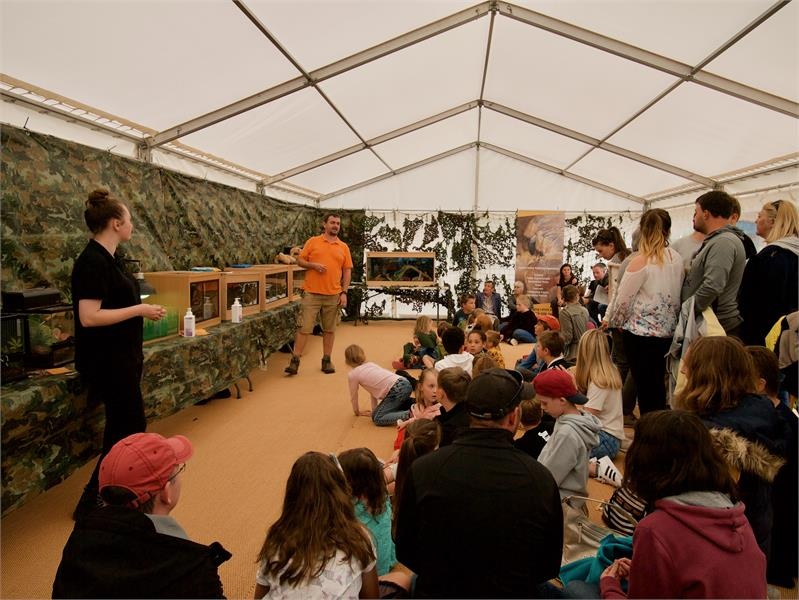 Creepy Crawly Shows at Mapperton