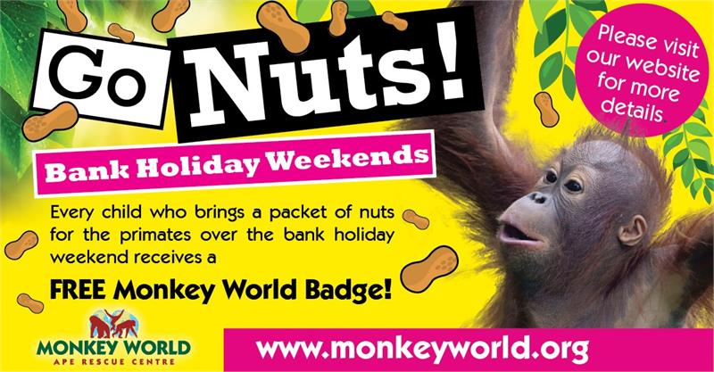 Go Nuts at Monkey World this Bank Holiday!