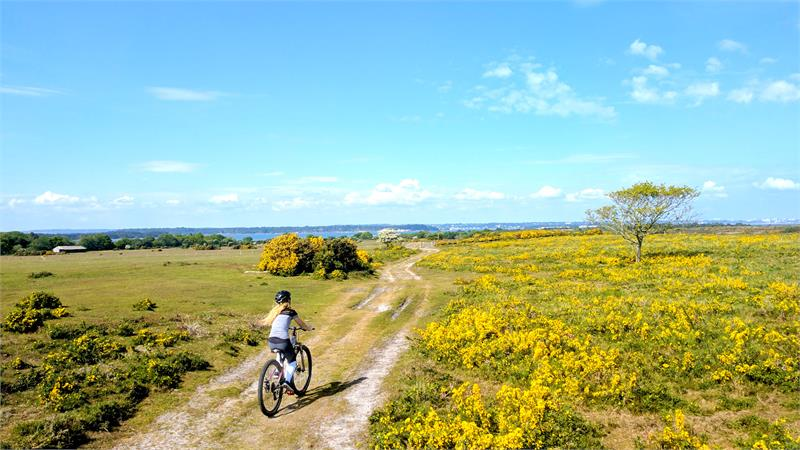 Purbeck Cycle Hire