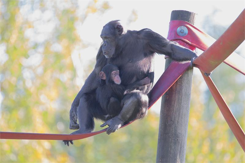 50% off for Seniors this September at Monkey World